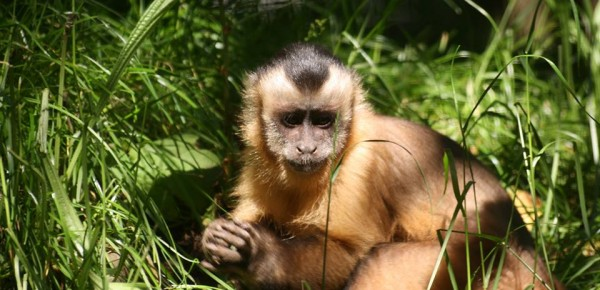 The Monkey Sanctuary Cornwall