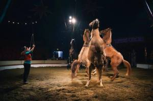 horses zippo