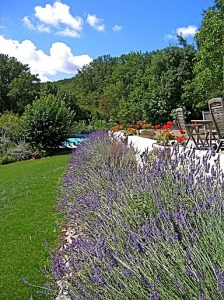 Lavender_around_the_terrace