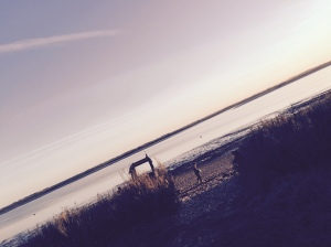 Foraging on Osea's beach
