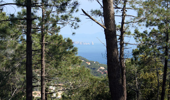 through trees begur villa sea
